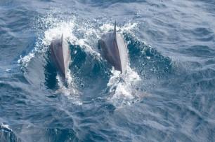 whale shark tour-107