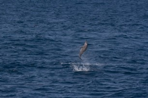 whale shark tour-115