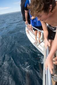 whale shark tour-99